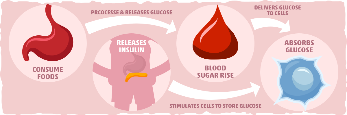 What is Insulin's Role in the Body?